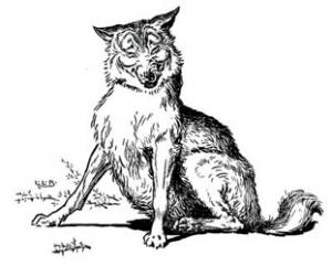 gravure de loup
